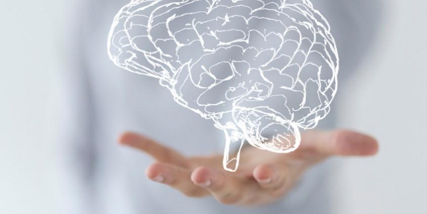 Gehirn   Foto: vege/Fotolia.com
