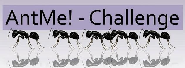 Ameisen AntMe