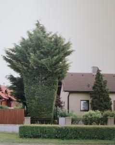 Cut Groß Enzersdorf | Foto: Gisela Erlacher