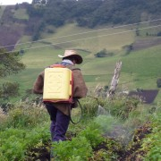 Pestizide in den Anden | Foto: Dominik Scheiben