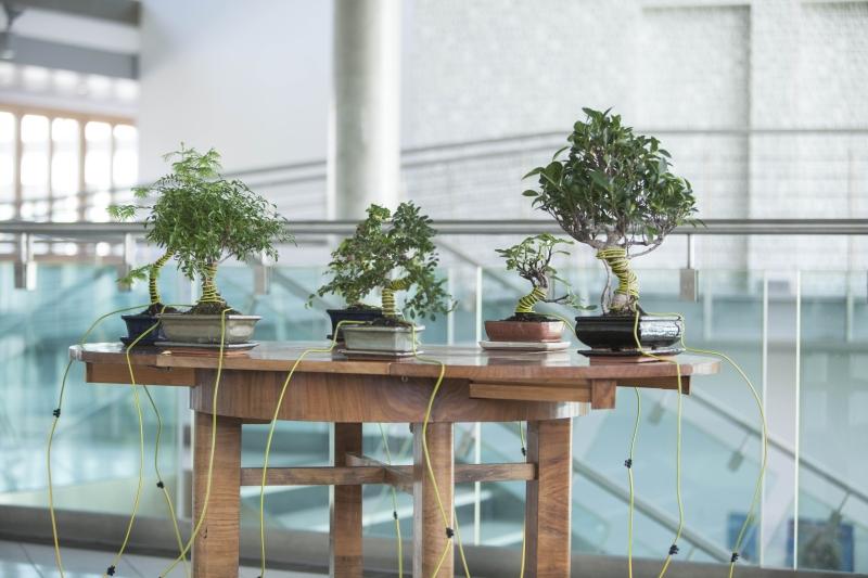 Christina Kubisch: Konferenz der Bäume|Foto: aau/Maurer
