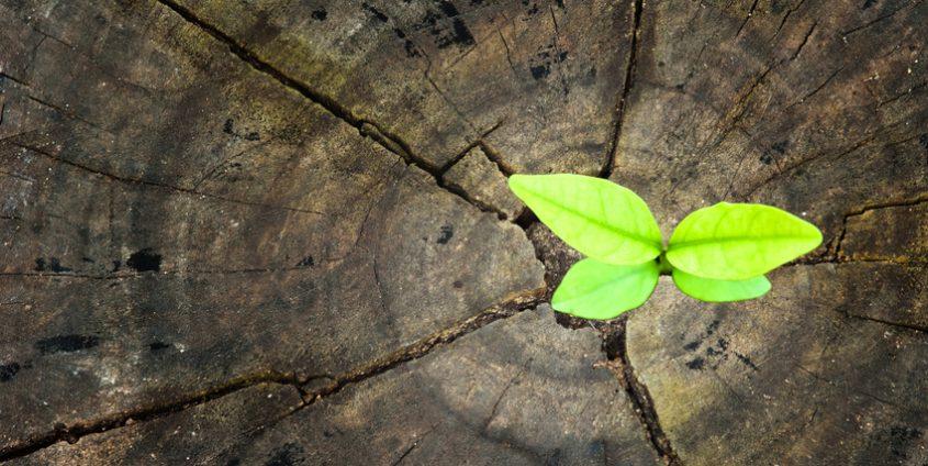 Pflanze wächst aus Baumstamm | Foto: sapgreen/Fotolia