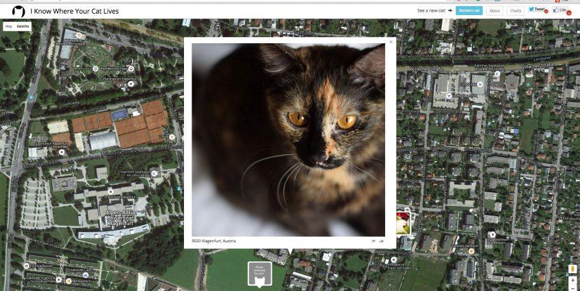 Screenshot iknowwhereyourcatlives.com