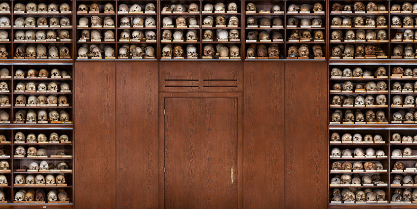 Detail from the 30 meter panoramic photograph of the skull cabinet at the Natural History Museum Vienna | Photo by Tal Adler, 2012
