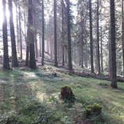 forest   Foto: aau/ist-cns