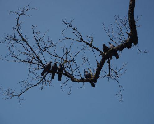 Stadt unter, Too Many Birds | Foto: aau/Maier
