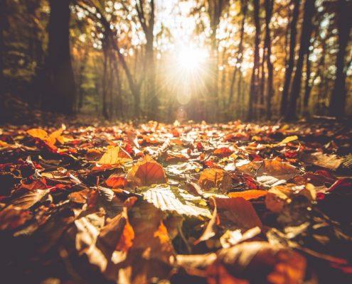 Wald | Foto: Tomasz Zajda/Fotolia.com
