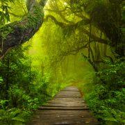 Dschungel | Foto: quickshooting/Fotolia.com