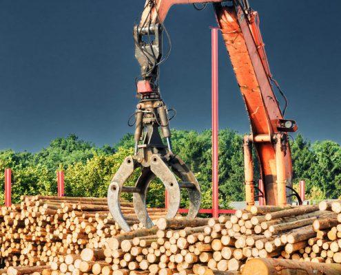 Holzwirtschaft | Foto: adobe-stock