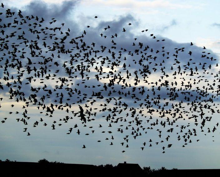 Vogelschwarm | Foto: Siegi/Fotolia