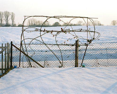 Brombeerranken im Schnee
