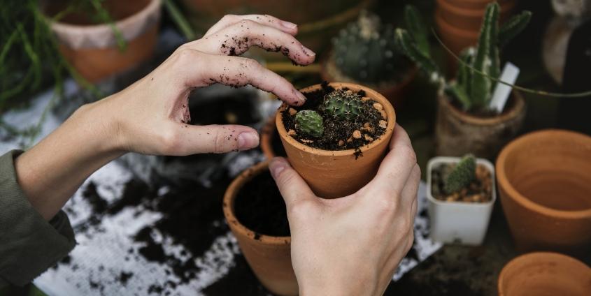 Pflanzentauschbörse am Unicampus Foto: rawpixel | pixabay
