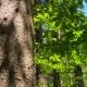 Nahaufnahme eines Baums im Wald