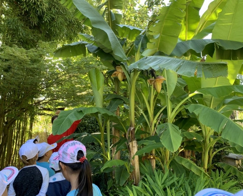 Science Holidays - Botanischer Garten
